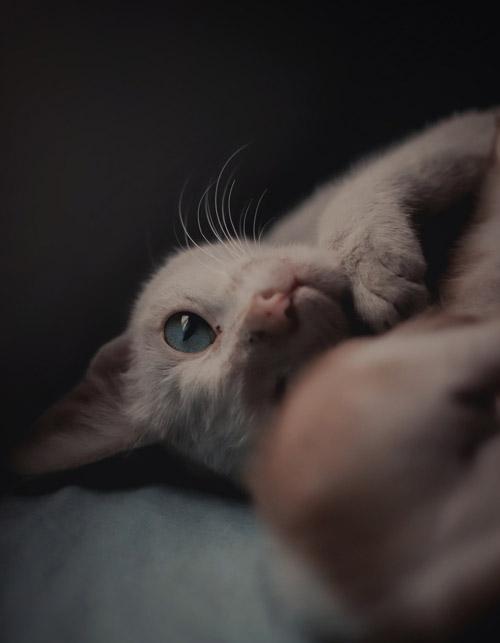 Какие прививки делать котенку