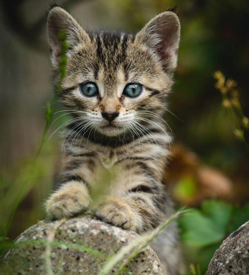 Какие прививки нужно делать котенку