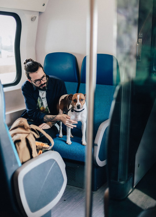 как путешествовать с собакой на поезде
