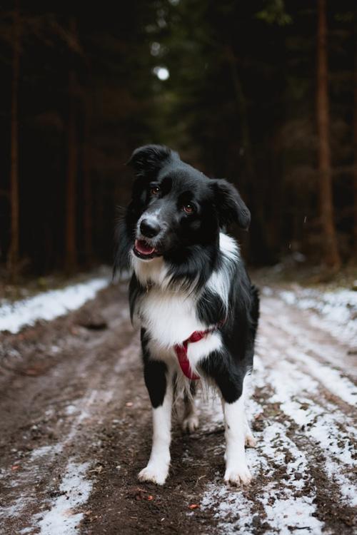 собака боится громких звуков как снять испуг