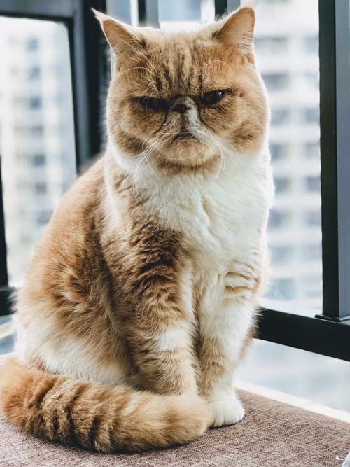 коронавирус у кошек и собак