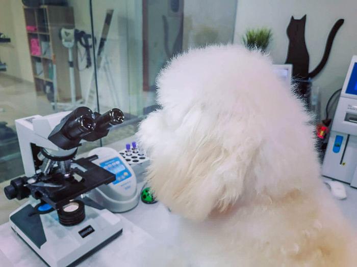 ветеринарная лаборатория в Москве