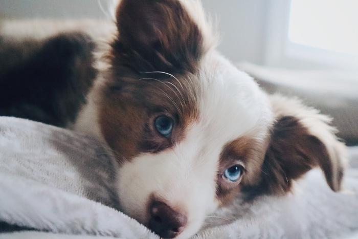 как помочь собаке во время течки
